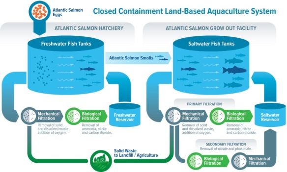 Closed containment land-based aquaculture